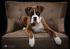 My Chair - Desktop Nexus Wallpapers Chair Photography, Animal Photography, Portrait Photography, Senior Portraits, Pet Portraits, Award Winning Photography, Dog Wallpaper, Color Harmony, Tabu