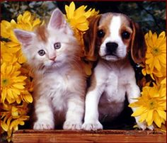 Cute Kitten and Puppy together