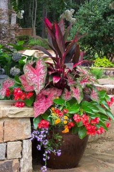 Potted plants for shady areas by Katybug