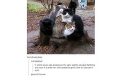 35 Hilarious Tumblr Posts That All Cat Owners Know To Be True (Slide #56) - Pawsome