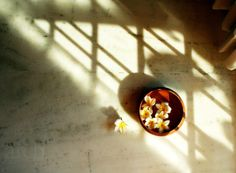 Frangipani Series: Fresh Floating Flowers in by ArchanaSrinivas