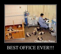 Baby Pandas...aw.