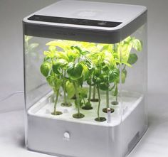 Have readymade fresh herbs and greenery at home by cultivating them on the Cube Hydroponic Grow Box by U-ING. The grow box comes with a timer which will Home Hydroponics, Hydroponic Grow Box, Hydroponic Farming, Hydroponic Plants, Aquaponics System, Indoor Farming, Diy Hydroponik, Indoor Vegetable Gardening, Gardening Tools