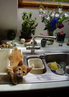 I'm not like other cats, I prefer the dish drainer.