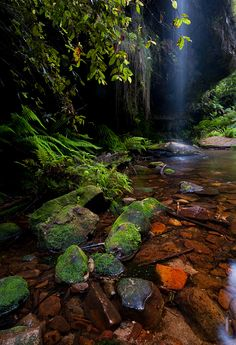 """The Source"" by Jérôme Berbigier. Lovely nature photography in Blackheath, Blue Mountains, Australia. Spiritual Photos, Blue Mountains Australia, Color Photography, Nature Photography, Secret Places, Beautiful Nature Scenes, Beautiful Places, Nice View, Mountain Homes"