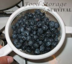 Dehydrating Blueberries - Food Storage and Survival