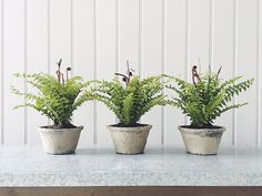 Wondering how to bring nature into your home? Check out our latest blog post for inspiration. #interior #interiors #interiordesign #interiorstyling #nature #plants #ferns #roseandgrey
