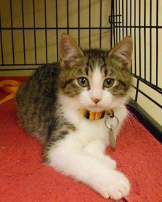 Kitten up for adoption
