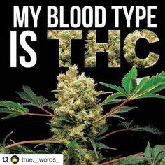 We run on THC. #Repost @true._.words_ with @repostapp.  #mybloodtype #bloodtype #thc #everydays420 #420 #blazeit #blazeup #sparkit #sparkup #marijuana #pot #weed #weedbefriends #maryjane #like #love #stoner #stoners #truetrue #frfr by mercurymmj