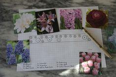 A spring bulb planning sheet for the novice gardener.