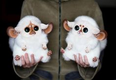 Funny pictures about Ultra-realistic Fantasy Dolls. It's Scary How Real They Look. Oh, and cool pics about Ultra-realistic Fantasy Dolls. It's Scary How Real They Look. Also, Ultra-realistic Fantasy Dolls. It's Scary How Real They Look. Fantasy Creatures, Mythical Creatures, Santani Dolls, Baby Animals, Cute Animals, Lilo Et Stitch, Realistic Dolls, Creepy Dolls, Creepy Cute