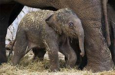 Ten ways elephants are like humans.