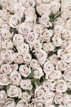 Paris Photograph - Cream Roses, Paris Flower Market, Romantic French Home Decor, Neutral Large Wall Art White Roses Wallpaper, White Roses Background, Flower Phone Wallpaper, Iphone Wallpaper, Cream Roses, Blush Roses, White Flowers, Beautiful Flowers, Iphone Hintegründe