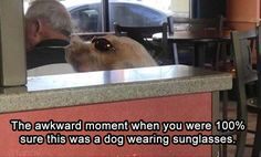 I actually thought it was a dog wearing sunglasses, even after I read the caption. Super Funny, Funny Cute, Really Funny, Hilarious, Funny Stuff, Funny Images, Funny Photos, What Do You Mean, Funny Pictures