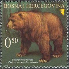 Oso grizzly (Ursus arctos horribilis). Stamp printed in Bosnia Herzegovina