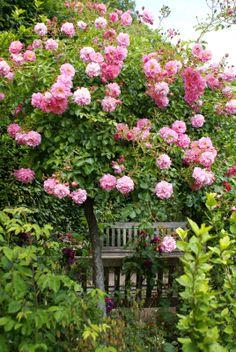 Abbey House Rose Garden