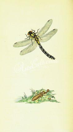186-Hymenoptera      ...