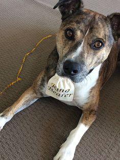 Personalisierte Ehering Tasche Hund Ringträger Zubehör Hund