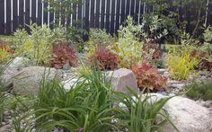 Ogród pełen barw – fotorelacja