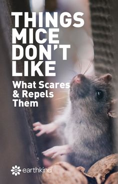 We know what mice hate. You know what they say, keep your friends close and your enemies closer. It's time you get to know mice a little better so you can kick them out for good. #pests #control
