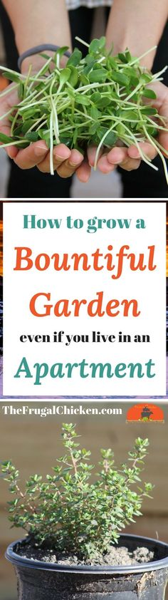 Only have a small area (or no area) for a garden? Here's how you can still harvest fresh greens, veggies, and fruit even if you live in an apartment!