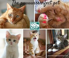 The puurrrfect pet!  www.thecatdoctoronline.com