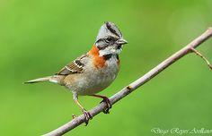 Two Birds, Small Birds, Little Birds, Love Birds, Pretty Birds, Beautiful Butterflies, Beautiful Birds, Animals Beautiful, Beautiful Photos Of Nature