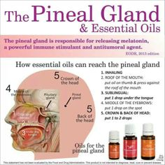 Young Living Essential Oils: Melatonin Pineal Gland ~ There are various methods to cleanse the pineal gland, from various supplements to psychedelic plant medicines such as iboga. Essential oils can also be used to help detox and stimulate the pineal glan Yl Oils, Doterra Oils, Doterra Essential Oils, Essential Oil Blends, Healing Oils, Aromatherapy Oils, Holistic Healing, Holistic Wellness, Healing Herbs