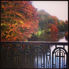 Beautiful #autumn colours of the River Kelvin in #Glasgow's west end