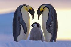 22 imagens que registram momentos em família de animais   Estilo