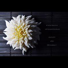 """一日一菓 「乱菊」 #煉切 製 #wagashi of the day""""Disturbance chrysanthemum"""" 本日は「乱菊」です。 今の私に出せる最高の作品を。 本日、心の底より心震える感動を 頂きました! 今日の感動を与えてくれた全ての感謝を込めて。ありがとう どうか終わる事のない 覚めない夢を、、、 Today is """"Rangiku"""". Now the best of work put out to me. Today, it is the heart trembling excitement from the bottom of my heart"""