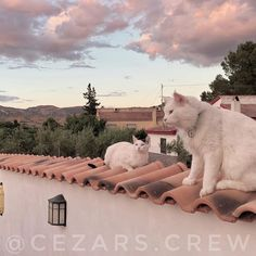 Just hanging out watching the sunset with the gang  #fluffycatcrew hang out in #spain