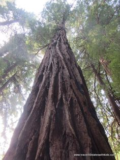 California – Muir Woods National Monument From Travel50StatesWit...