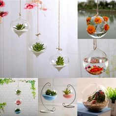 Buy Hanging Ball Glass Flower Planter Vase Terrarium Container Landscape Bottle at Wish - Shopping Made Fun