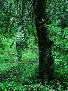 Queen Elizabeth forest park (Aberfoyle) Scotland 2