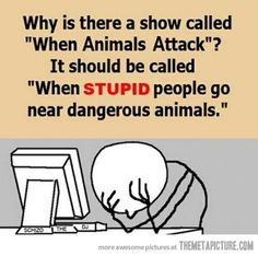When animals attack…