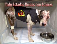 "This is ""Dolores"". A month ago, she was burned with acid. Right now, she is in treatment and looking forward to a complete recovery thanks to a local Org. called ""Colitas Sonrientes INC"" and voluntary wok. There are thousand of animals being abused and brutalized on the streets. Please, Save their lives by spaying and/or neutering your pets. If someone you know is thinking about owning a new pet, explained to them how Adoption saves lives.Make a REAL commitment with your pets. STOP ANIMAL…"
