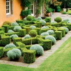 I like the interesting contrast between the silver topiary and the box hedge.