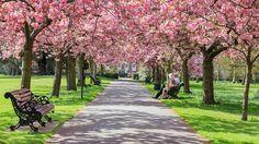 Primavera de Londres - Greenwich Park