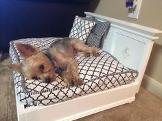 Teeny Tiny Pet Bed - Dog Bed - Cat Bed - Size Variations by SimplyJeanna on Etsy Bed Frame Sizes, Bed Sizes, Leg Painting, Diy Dog Bed, Bed Frame And Headboard, Dog Rooms, Pet Furniture, Small Dog Breeds, Small Dogs
