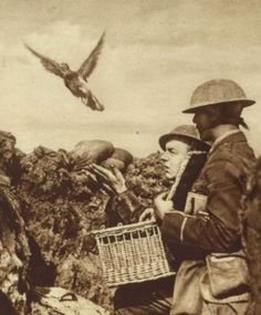 pigeon-carrier