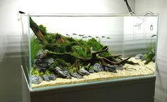 To spark your inspiration we have asked George Farmer some questions about aquascaping. As a well known aquascaper and co-founder of the UK Aquatic Plants Society he is incredibly talented and can teach us some cool tips and tricks about aquascaping. Biotope Aquarium, Wall Aquarium, Aquarium Setup, Home Aquarium, Aquarium Design, Marine Aquarium, Aquarium Fish Tank, Planted Aquarium, Fish Tanks