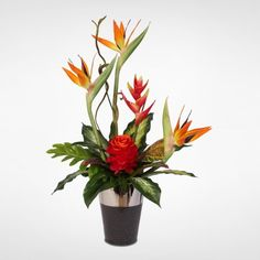 Bird of Paradise with Ginger and Heliconia in a Ceramic Vase