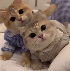 @PpathR Cute Baby Cats, Cute Babies, Cute Wild Animals, Cat Aesthetic, Kittens And Puppies, Good Morning Wishes, British Shorthair, Cat Gif, Funny Cats