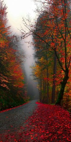 44 Ideas nature landscape beautiful places photography for 2019 Fall Pictures, Pretty Pictures, Autumn Photos, Fall Pics, Natur Wallpaper, Belle Photo, Beautiful Landscapes, Autumn Leaves, Autumn Rain