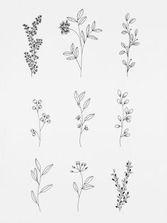 Simple Botanicals Art Print by WildBloom Art - X-Small Black And White Flower Tattoo, Black And White Flowers, Tiny Tattoos For Girls, Small Tattoos, Tiny Flower Tattoos, Plant Tattoo, Herb Tattoo, Small Flower Drawings, Flower Outline Tattoo