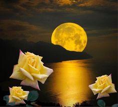 Beautiful Rose Flowers, Gods Creation, Flower Pictures, Yellow Roses, Full Moon, Beautiful Landscapes, Good Night, Sunrises, Gardening