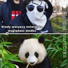 Lejdi Fridriś From Miczigen - Nowa fala memów 🌊 Panda Bear, Squad, Sisters, Humor, Memes, Funny, Animals, Instagram, Animales