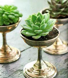 silver & succulents
