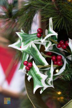 #redandgreen #redchristmasdecor #greenchristmasdecor #holly #christmasholly #hollypick #christmas #christmastime #christmasseason #christmasvibes #christmasspirit #christmasdecorating #christmasdecor #christmasdecorations #christmashome #christmasinspiration #christmasinspo #vermeersgardencentre